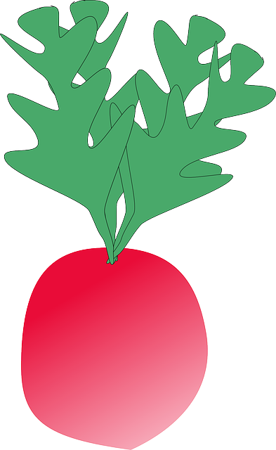 radish, vegetable, food, plant, red, small, fresh