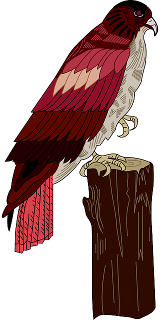 red, bird, wings, hawk, stump, feathers, perched