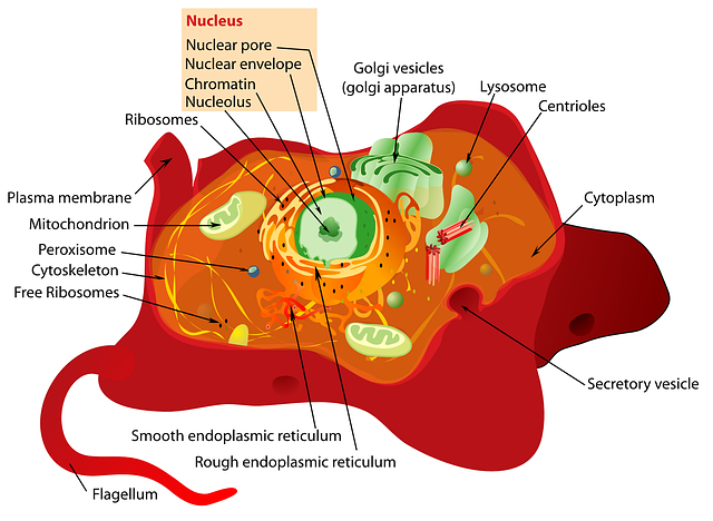 red, science, diagram, cell, cartoon, cellular, plant