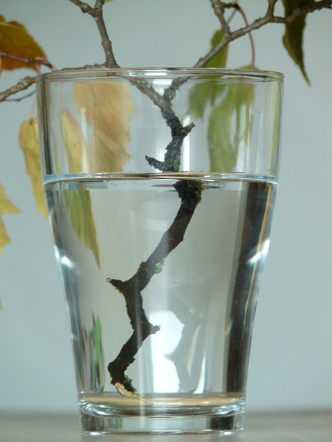 refraction, glass, road, water, branch, wet, casting