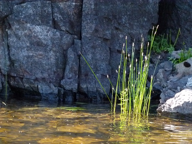 rocky, shore line, water, plants, grass, rocks, outside