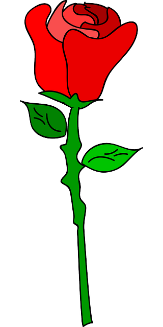 rose, flower, love, romance, romantic, blooming
