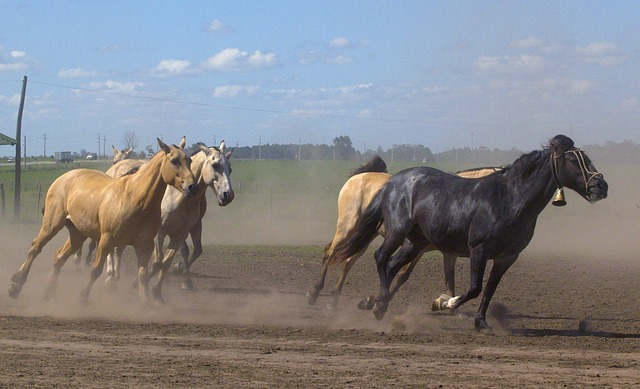 running, horses, animals, mammal, nature, dust