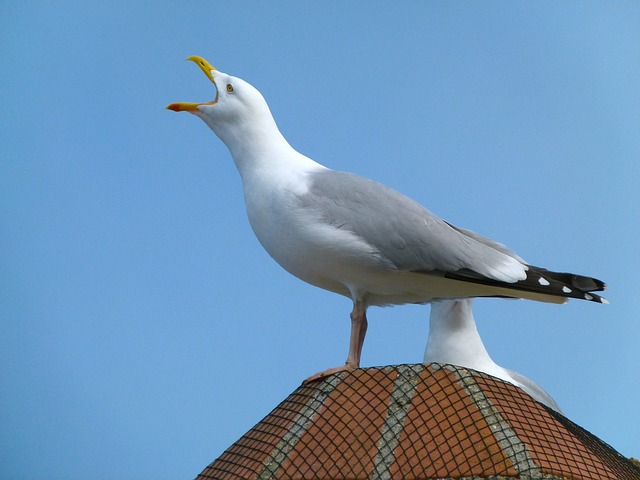 sea gull, bird, sky, clouds, building, on top, macro