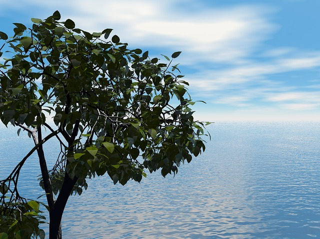 sea, ocean, water, sky, clouds, spring, summer, tree