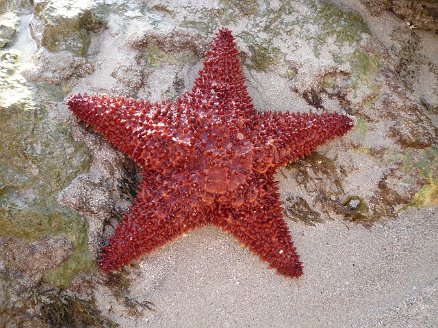 sea, sea star, island, martinique, ocean, caribbean