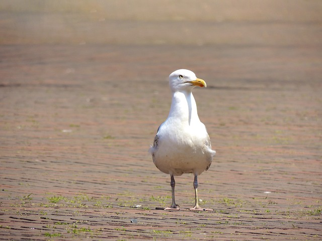 seagull, bird, animal, bill, creature, feather