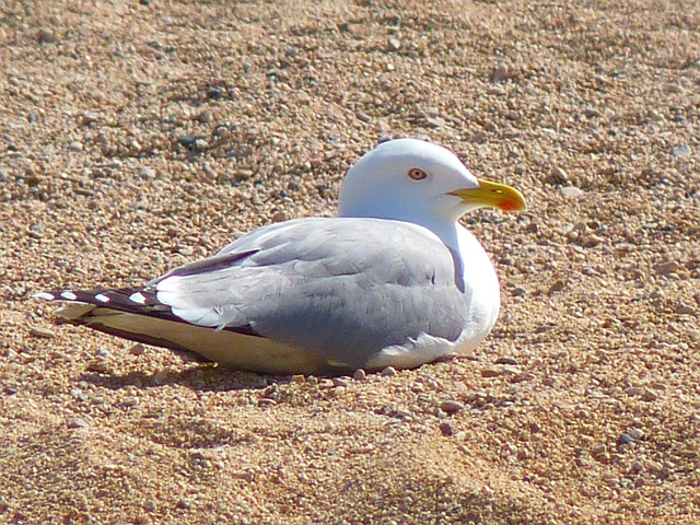 seagull, bird, animal, creature, nature, beach, sand