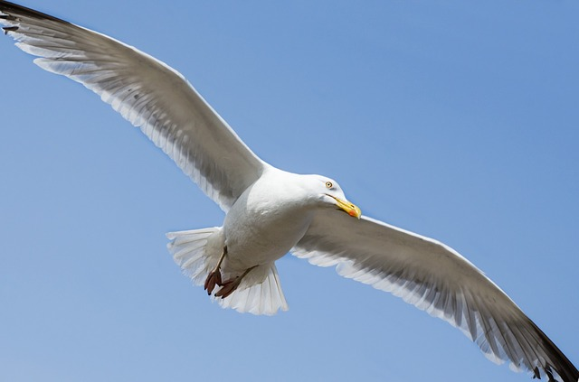 seagull, bird, aviator, animal, close- up, sea, wild