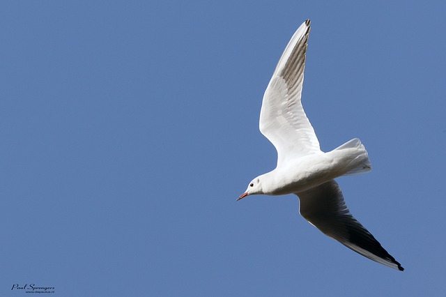seagull, bird, wings, nature, fly