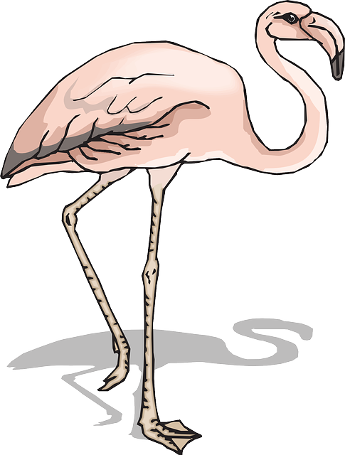 shadow, bird, wings, flamingo, long, neck, animal, legs