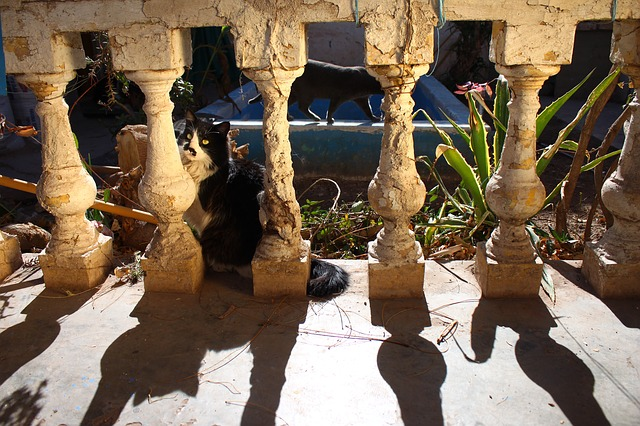 shadow, columns, old, cat, shadows, sun, animals