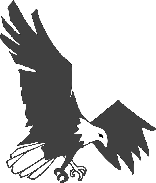 shapes, eagle, bird, wings, animal, landing, claws