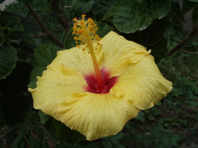 sicily, flower, yellow, nature, plant, italy