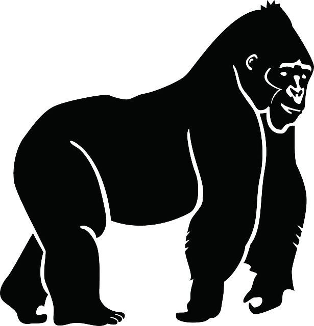 silhouette, ape, gorilla, animal, jungle, zoo