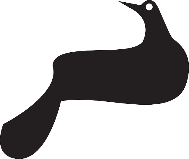 silhouette, bird, dove, wings, animal, tail, perched
