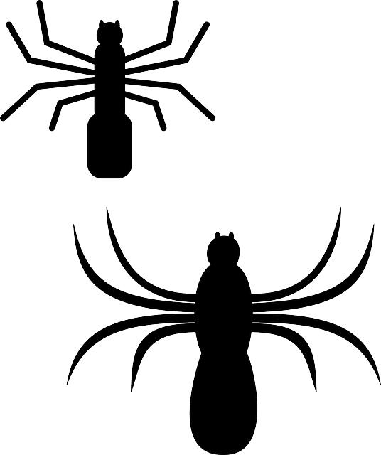 silhouette, cartoon, bugs, spider, web, insect, spiders