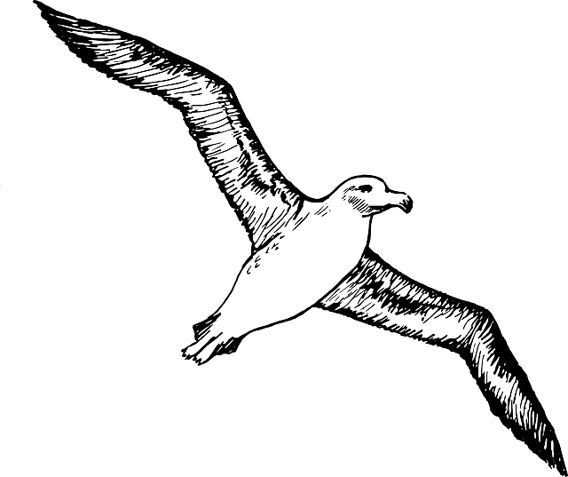 sketch, silhouette, cartoon, page, bird, seagull, fly