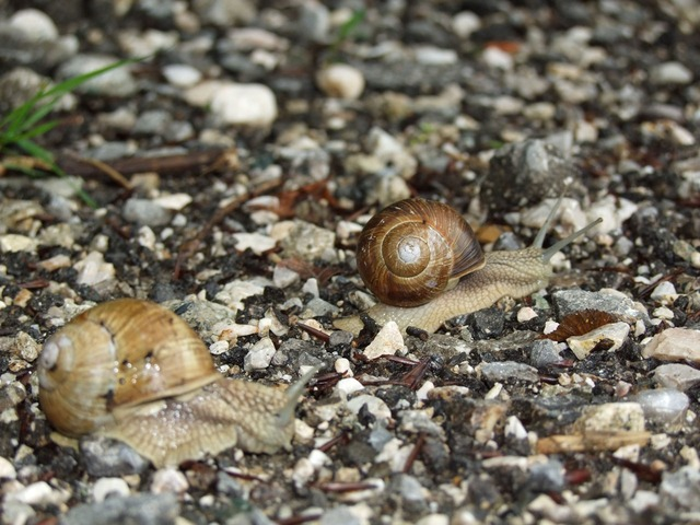 snail, nature, path, line, water, wood
