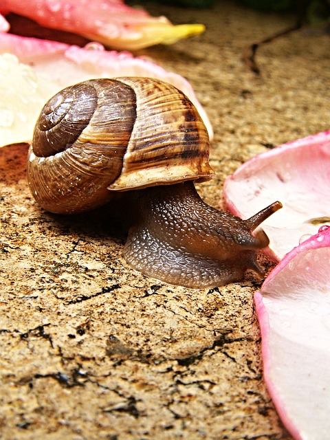 snail, pink tickets, macro, tiles, wet, conch