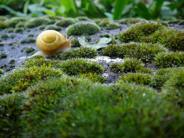 snail, shell, animal, wet, rain, snail shells, plant