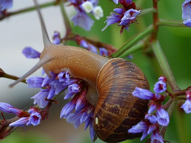 snail, shell, flower, journal, slowly, creature, animal