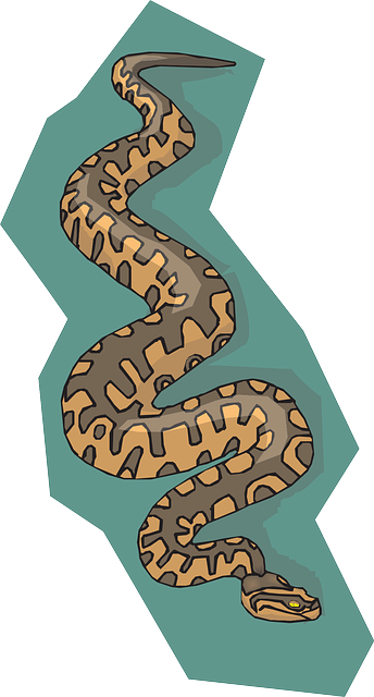 snake, brown, background, reptile, teal, with