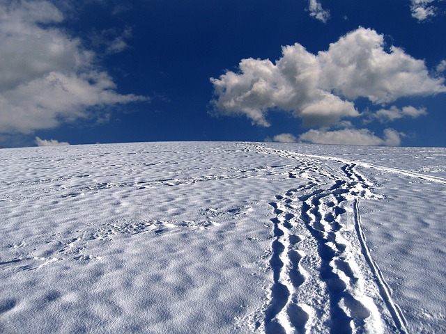 snow tracks, traces, snow, mountain, black forest