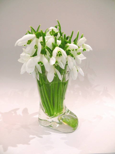snowdrops, spring, season, flower, macro, vase, lovely