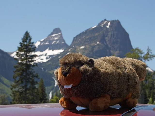 soft toy, marmot, mountains, fur, soft, fluffy, cuddly