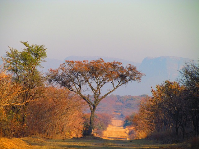 south africa, tree, nature, road, winter