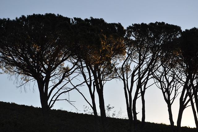 south africa, trees, avenue
