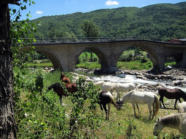 spain, landscape, bridge, horses, animals, architecture