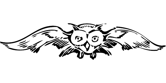 spread, owl, front, wings, bird, animal