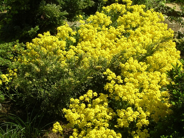 spring, spring flowers, flower, yellow