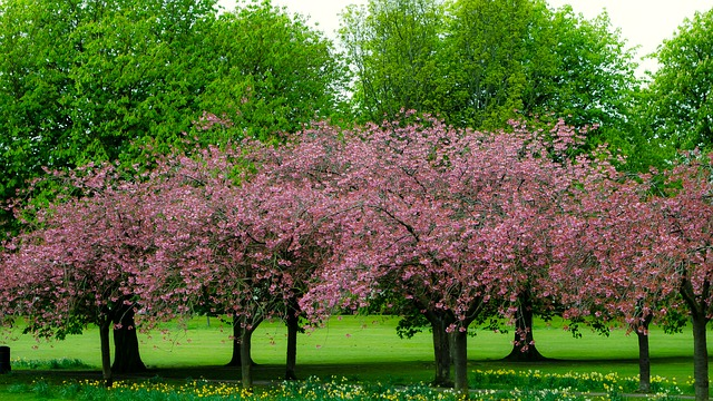 spring, tree, branch, branches, season, nature, green