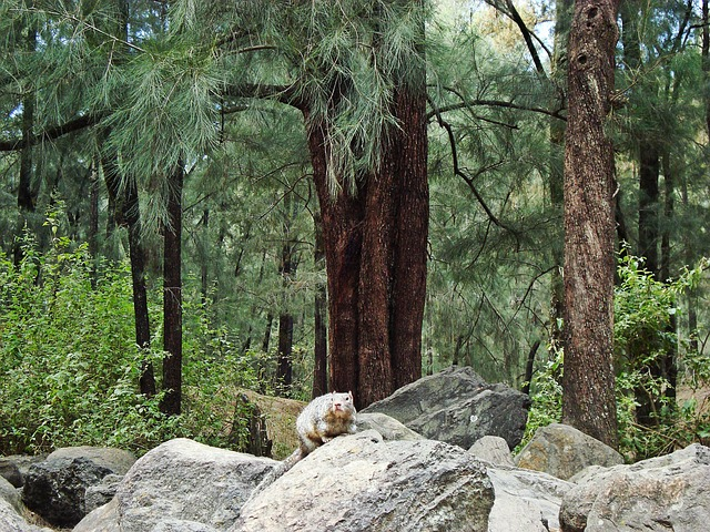 squirrel, trees, natural, forest, animals