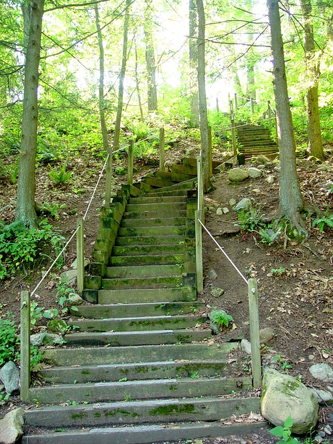 stairs, steps, wooden steps, path, forest, woods, trees