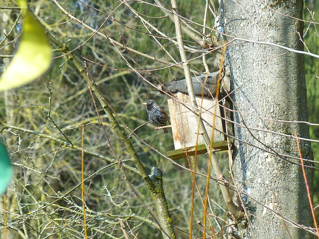 star, bird, animal, nesting box, black, spotted