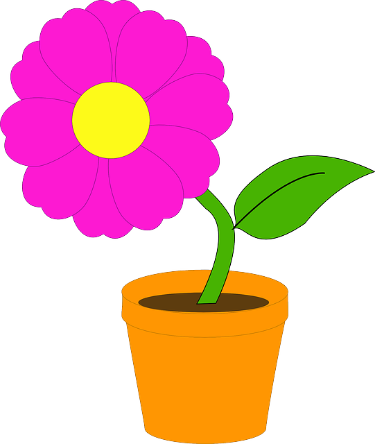 ste, plants, leaf, flower, flowers, pot, flowerpot
