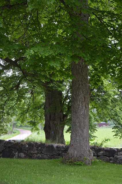 stone wall, trees, church wall