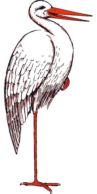 stork, bird, beak, animal, one, outline, foot, standing