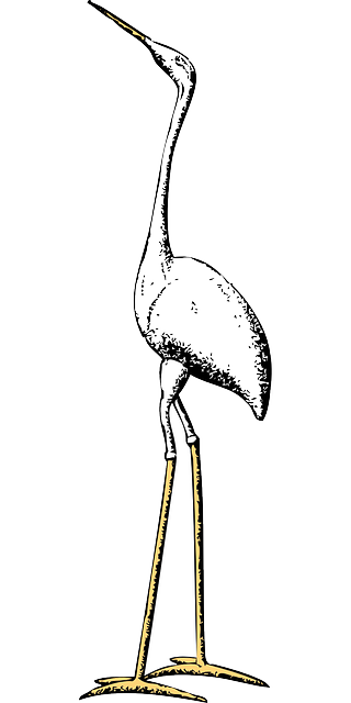 stork, marabou, crane, animal, bird, long, neck, tall