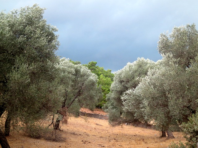 storm, threatening clouds, trees, turkey