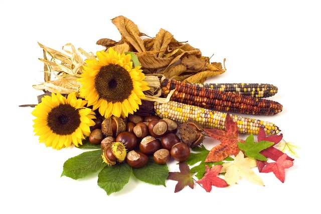sunflower, sunflowers, conker, conkers, corn, leaf