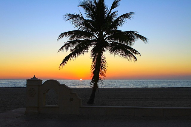 sunrise, dawn, daybreak, palm, tree, sky, sand, beach