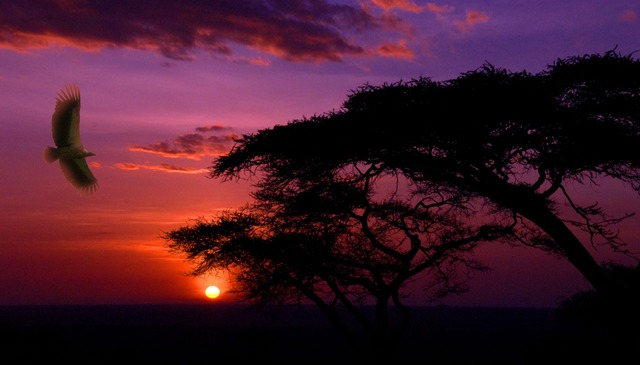 sunset, bird, africa