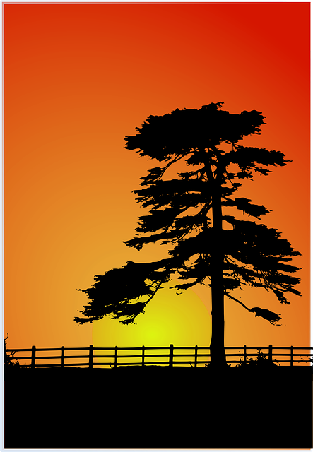 sunset, cedar, cedar tree, fence, red, shadow