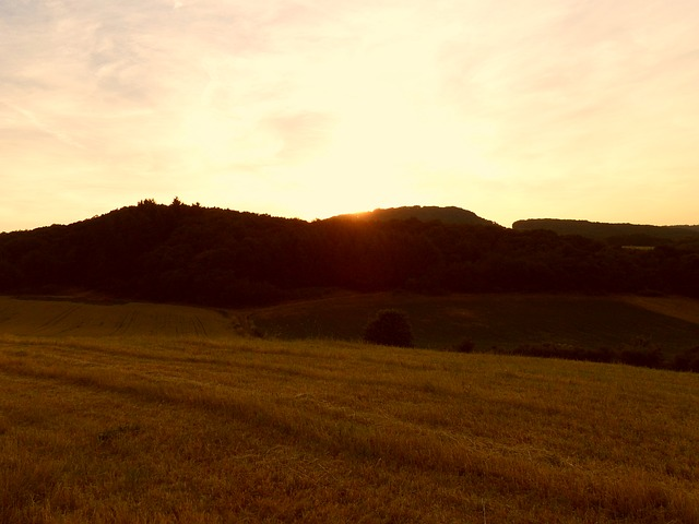 sunset, forest, field, evening sky, abendstimmung