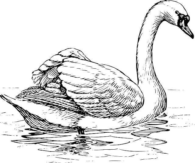swan, bird, animal, biology, ornithology, zoology